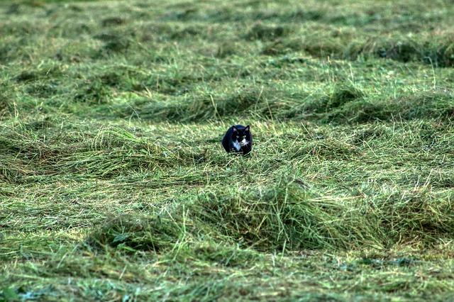 草むらと猫