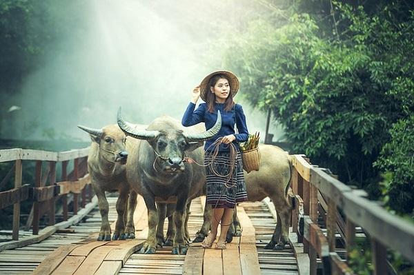 牛飼いの女性