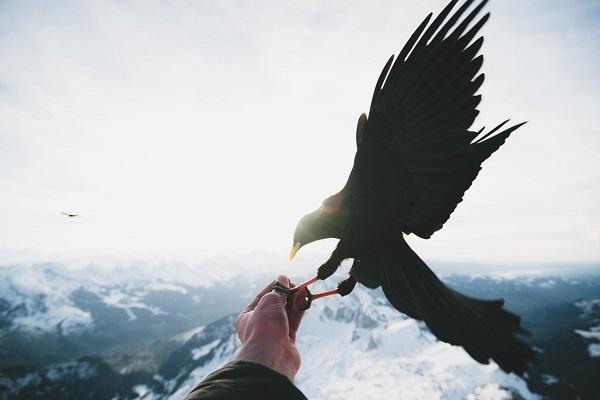 鷹(鳥)と指(腕)