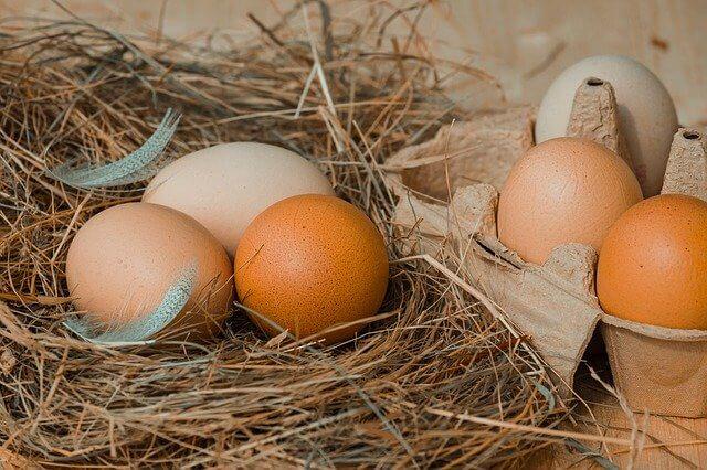 にわとりの卵