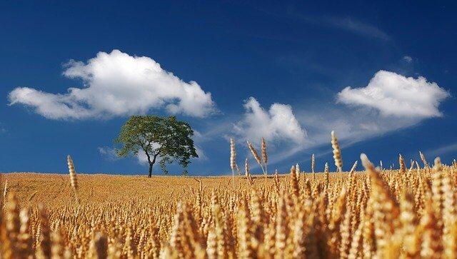 収穫と豊かな土壌2