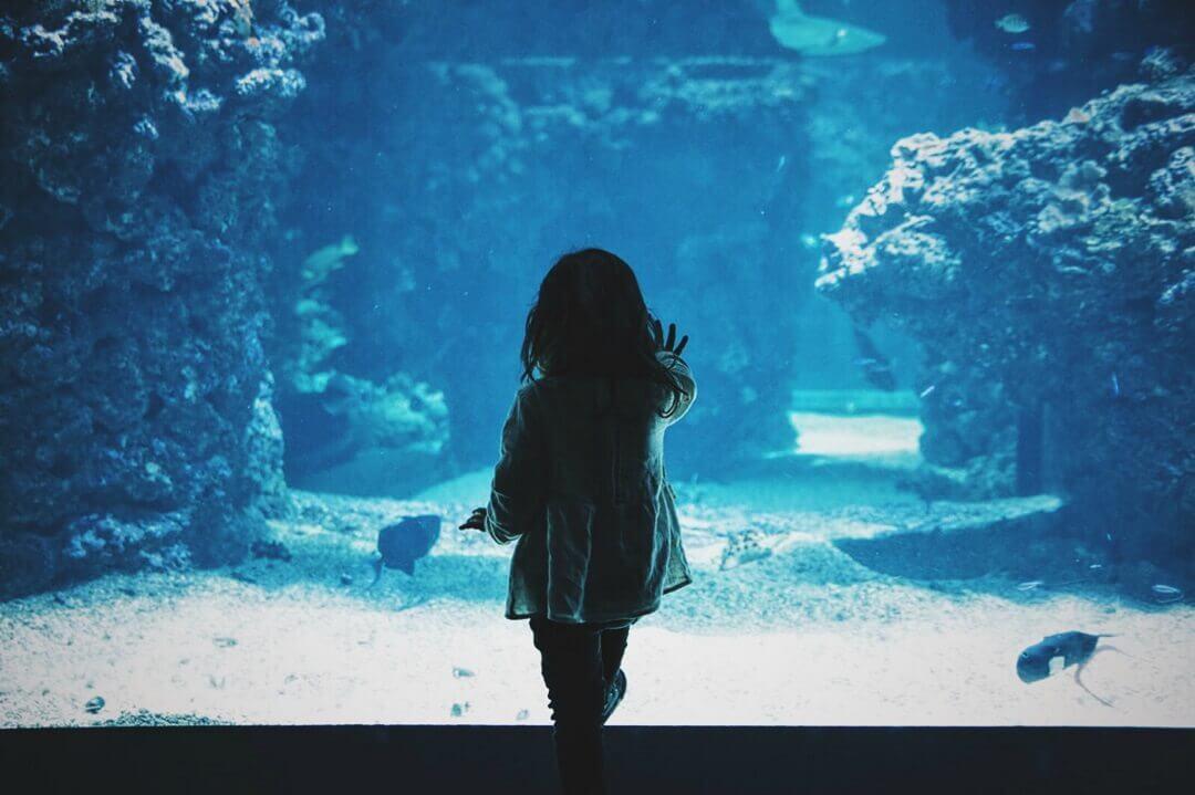 水族館で水槽を見る女の子