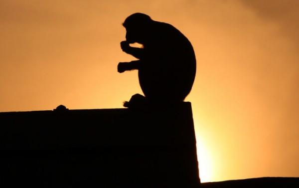 夕焼けと猿