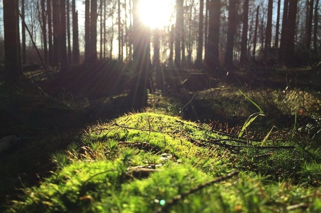 幻想的|森と木漏れ日